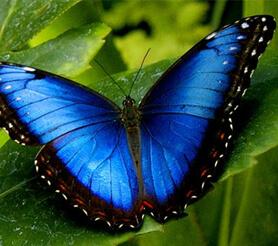 Парк тропических бабочек в Казани: как добраться и сколько стоит посещение